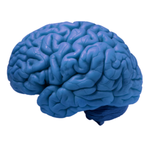 cropped-brain-blue-M.png